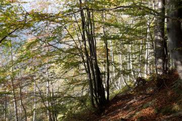 Incontro territoriale Val Sangone