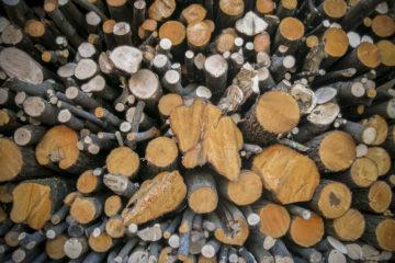 Giornata Biomasse e Territorio a Mattie